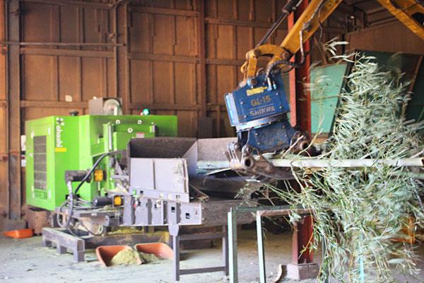 伐採してきた竹を笹ごと粉砕機へ投入